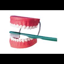 """Óriás"" Fogsor  demonstrációs modell+ óriás fogkefe - mulázs"